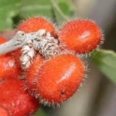 Воск ягод сумаха