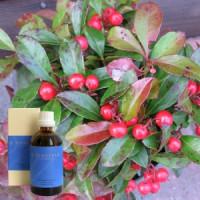 Масло Гаультерия 5% в оливковом масле  Gaultheria aeth. 5 % in Olivenl