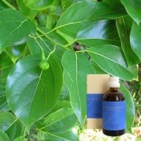 Камфара 5% в оливковом масле Camphora 5 % in Olivenl, 100 ml