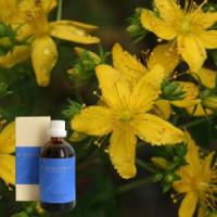 Зверобой 5% в оливковом масле Hypericum ex herba 5 % in Olivenl, 100 ml