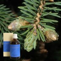 Ель 10% в оливковом масле, Picea aeth. 10 % in Olivenl, 100 ml