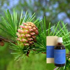 Лиственницы смола 10% в оливковом масле Terebinthina laricina 10 % in Olivenl, 100 ml
