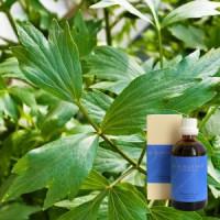 Любисток 5% в оливковом масле Levisticum e rad. 5 % in Olivenl, 100 ml