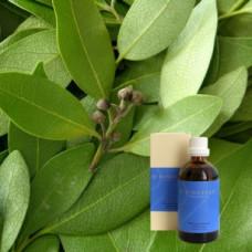 Лавр в оливковом масле Laurus nobilis aeth. 5 % in Olivenl, 100 ml