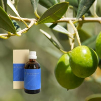Оливковое масло Olea, 100 ml
