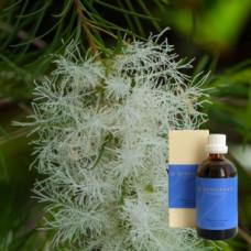Чайное дерево в оливковом масле Demeter Melaleuca alternifolia 10 % in Olivenl, 100 ml