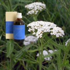 Масло Тысячелистник  5% в оливковом масле Achillea millefolii flos 5 % in Olivenl