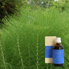 Масло Хвощ 5% в оливковом масле Equisetum ex herba 5 % in Olivenl