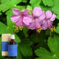 Герань5 %воливковом масле Demeter Geranii verum aeth. 5 % in Olivenl, 100 ml