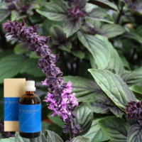 Базилик в оливковом маслеDemeter Basilicumaeth. 5 % in-Olivenоl, 100 ml