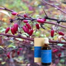 Барбарис 5% в оливковом  масле   Berberis e rad. 5 % in Olivenöl, 100 ml
